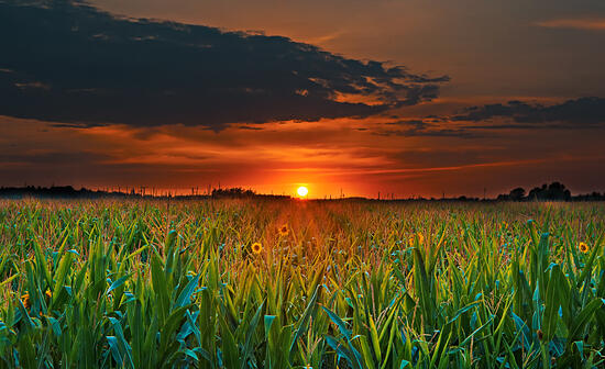 farm and ag life on Pinterest
